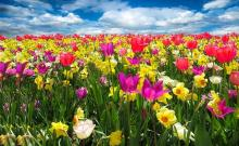 Newsletter Grannies - Spring Awakening