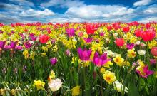Newsletter Grannies - Spring awakening!